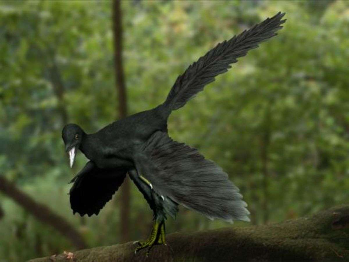 archeopteryx_artist_impression.wikipedia