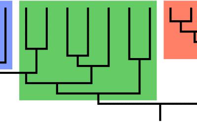 De cladogram