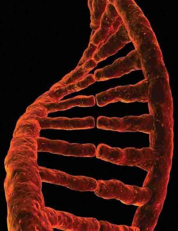 DNA-datering van fossielen
