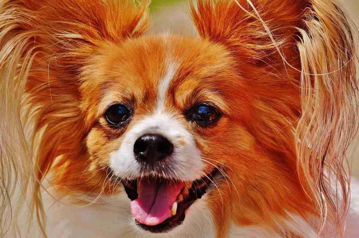 dog-1532754_1280