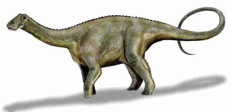Nigersaurus_BW.wikipedia