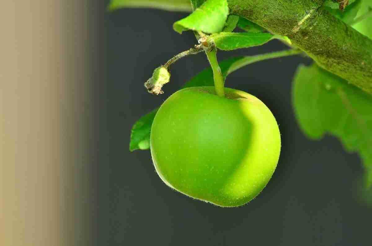 apple-1532055_1280