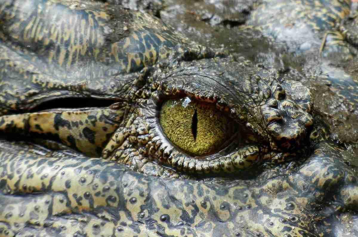 Het krokodillenhart: een uniek ontwerp