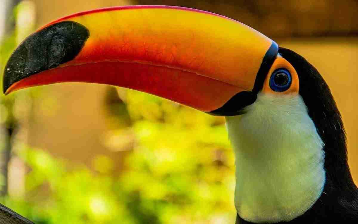 toucans-556025_1280