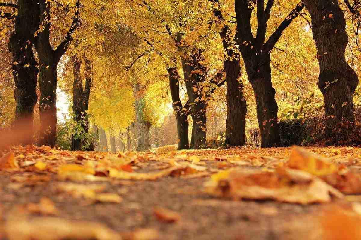 herfst_bomen-pixabay