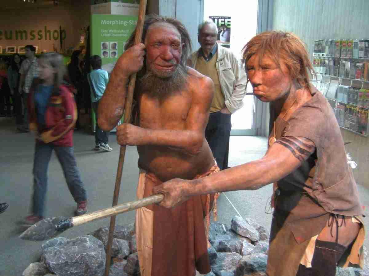 neandertala_homo_modelo_en_neand-muzeo-wikipedia