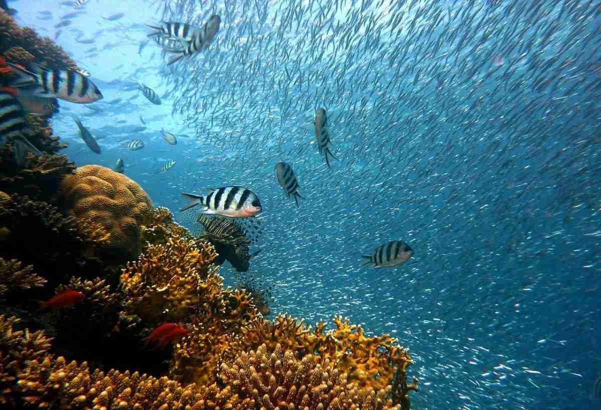 vissen_koraal-pixabay