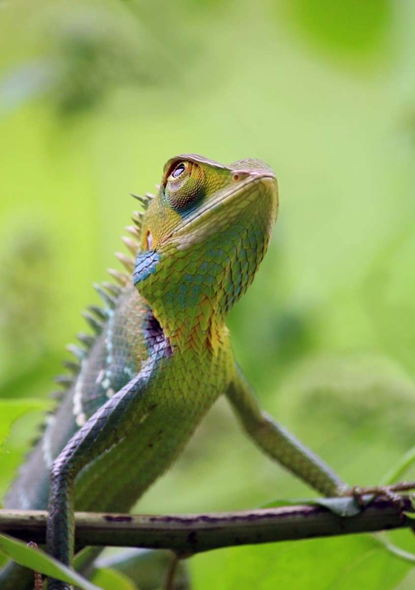 kameleon-pixabay