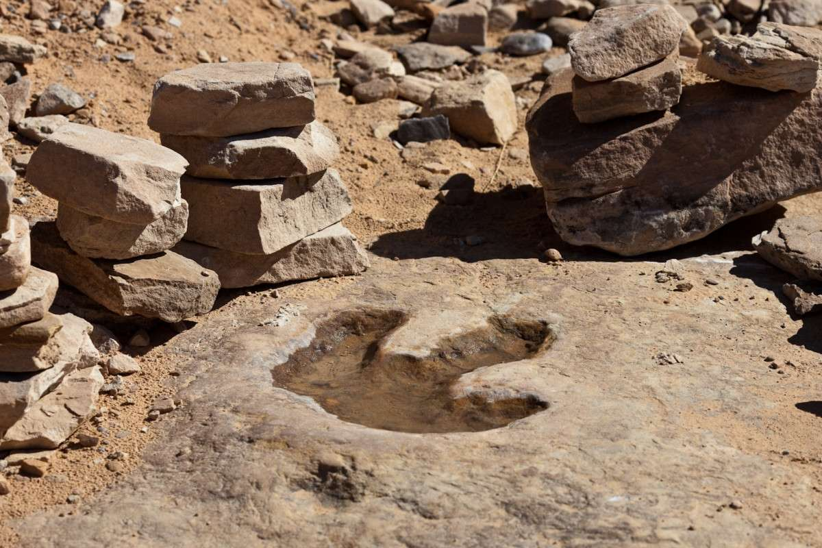Dinosaur footprint