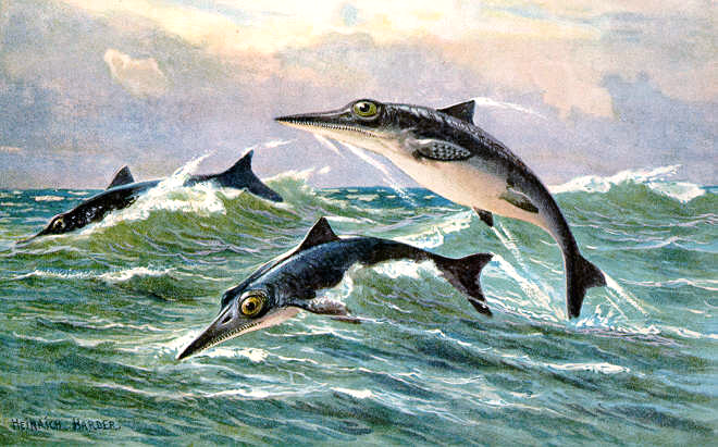 ichthyosaur_hharder-wikipedia