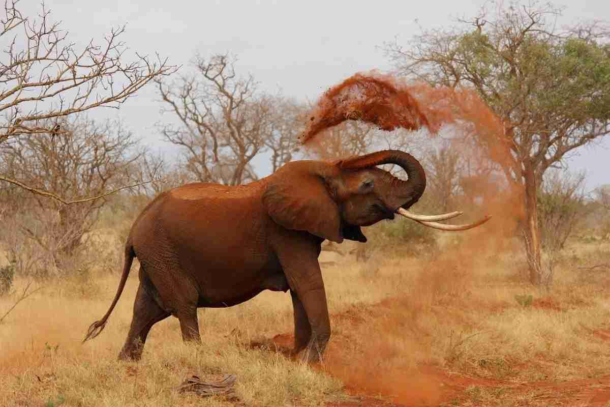 olifant-pixabay