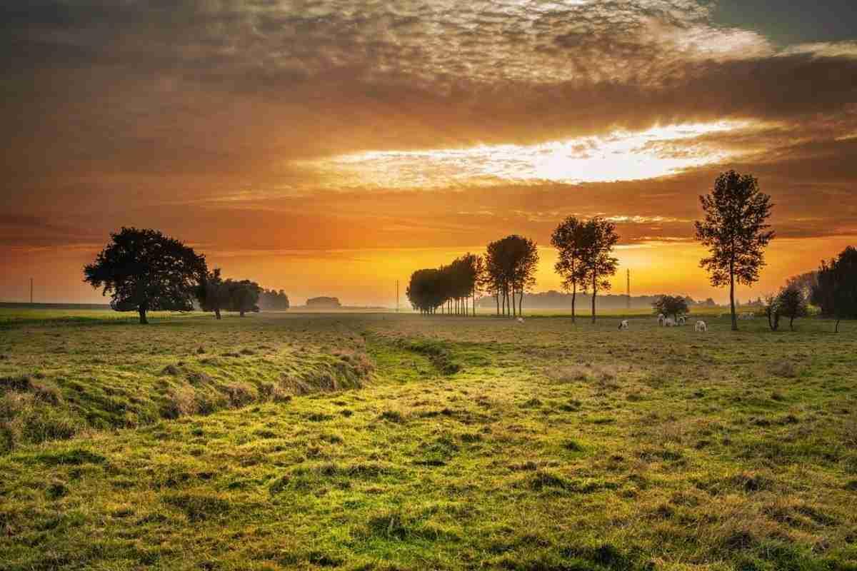 platteland_koeien.pixabay