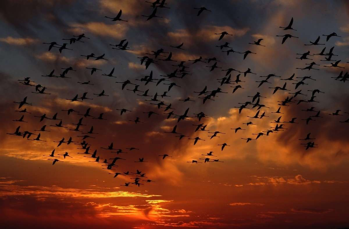 zwerm_flamingos-pixabay