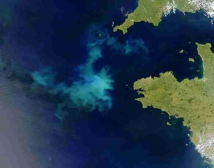 Algenbloei_Atlantische_Oceaan.95stellingen