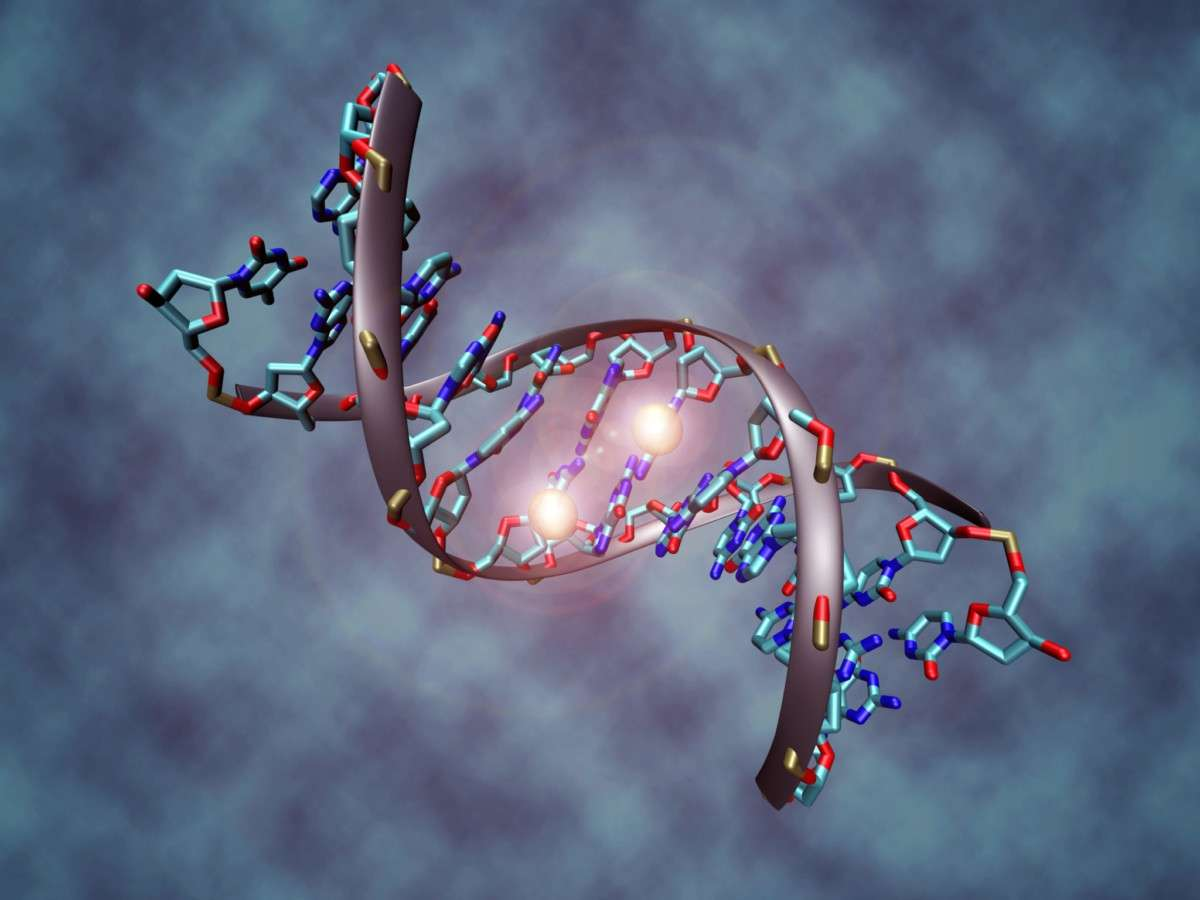 DNA_methylation.wikipedia