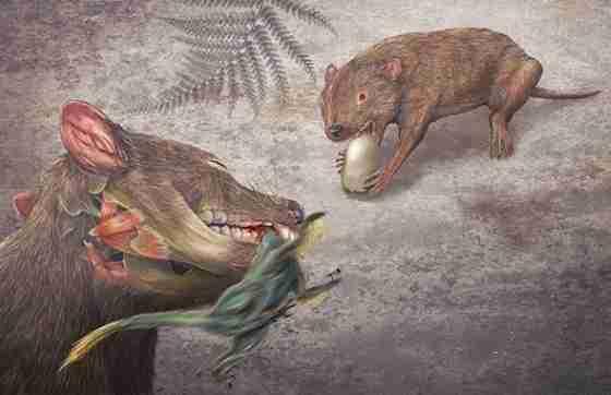 Didelphodon-vorax.weetmagazine