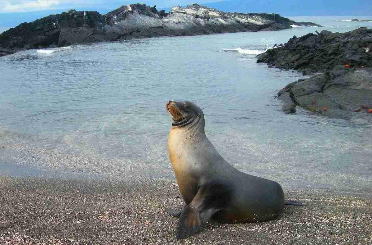 Ecuador_zeeleeuw.pixabay