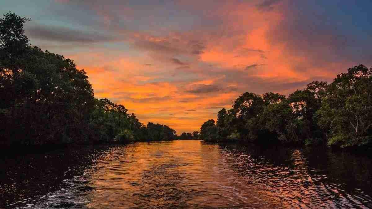rivier_mangrove.pixabay