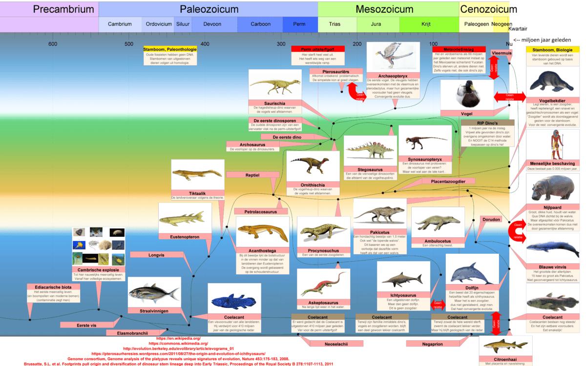 Convergente evolutie