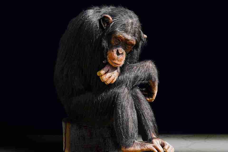 Evolutie van de mens: de ontbrekende schakel ontbreekt nog steeds