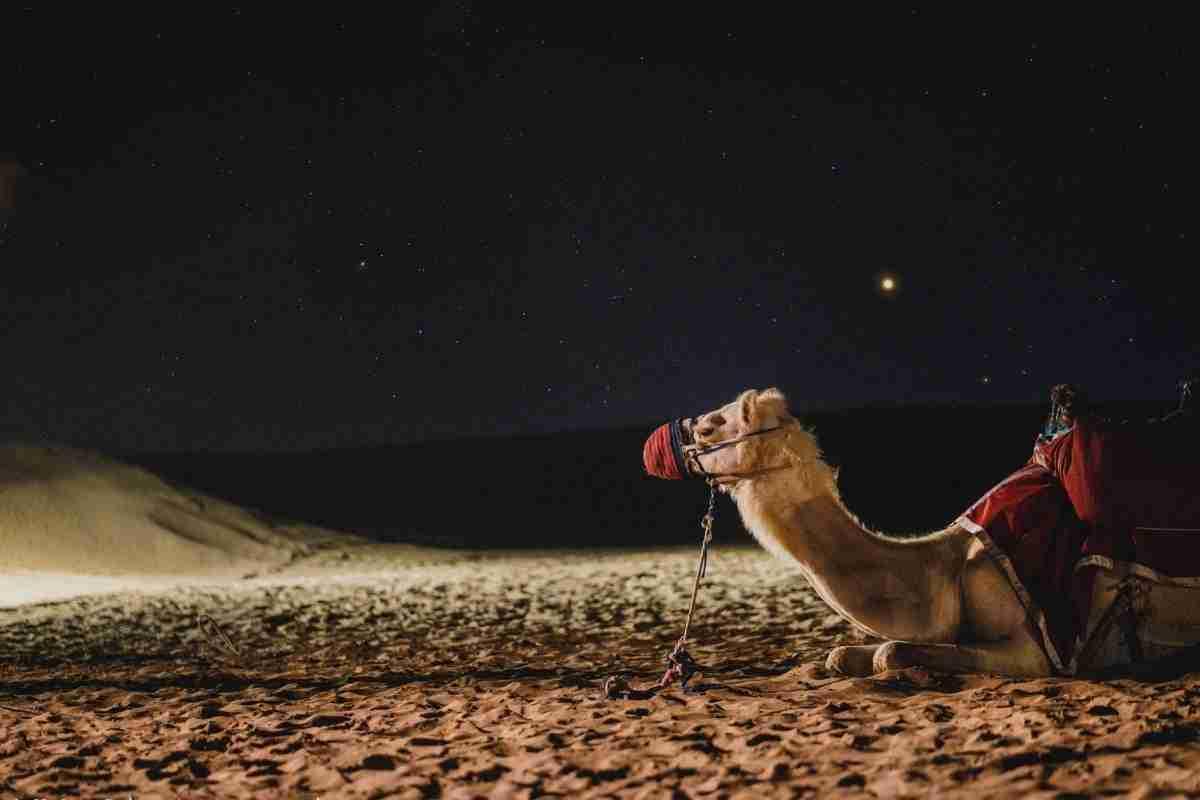 Aartsvaders en kamelen – staat er een fout in de Bijbel?